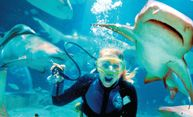Scenic Tours Underwater World